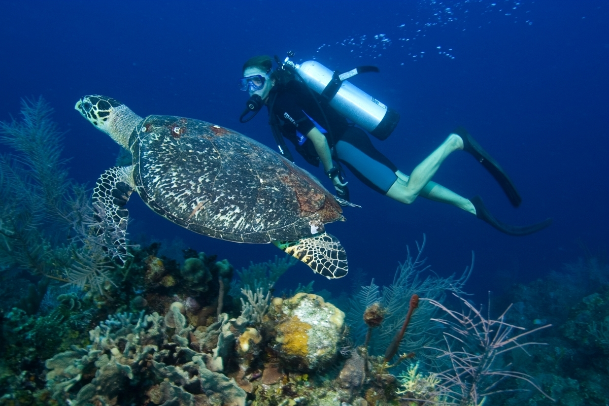 turtle_Diving_Malta_