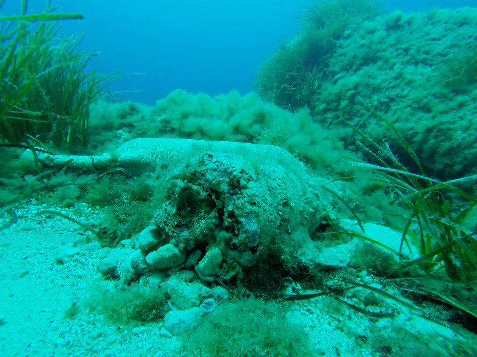 Octopus in anphora