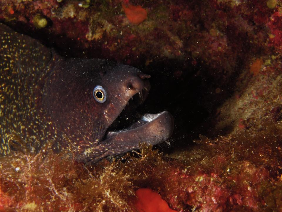 malta_diving_1