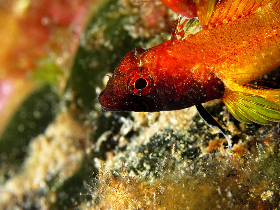 Diving_Malta10
