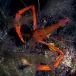 Diving_Malta17