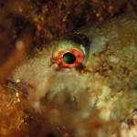 Diving_Malta4