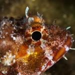 Diving_Malta8
